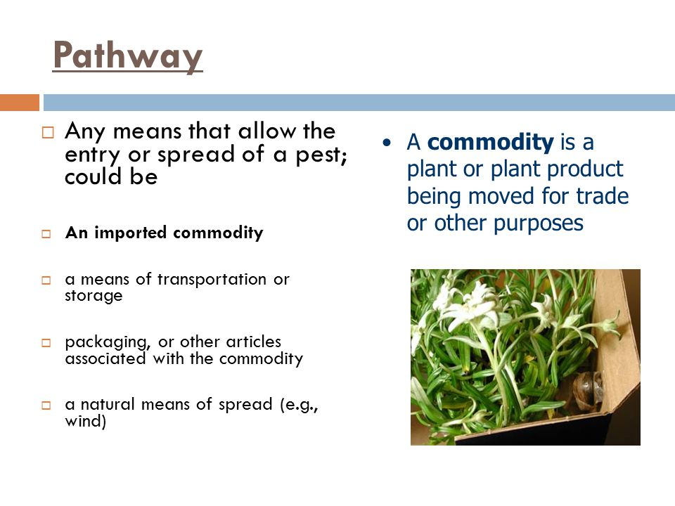 Pathway Any means that allow the entry or spread of a pest; could be