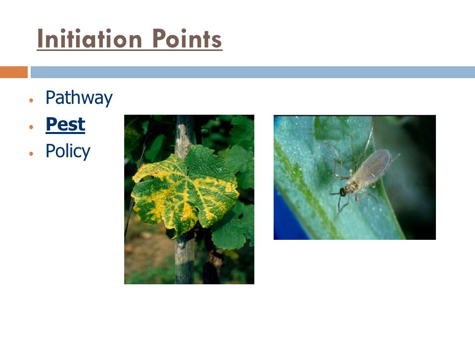 Initiation Points Pathway Pest Policy