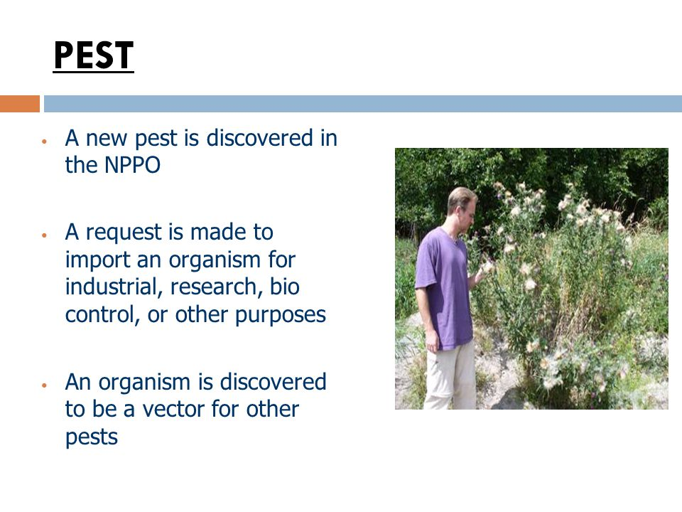 PEST A new pest is discovered in the NPPO