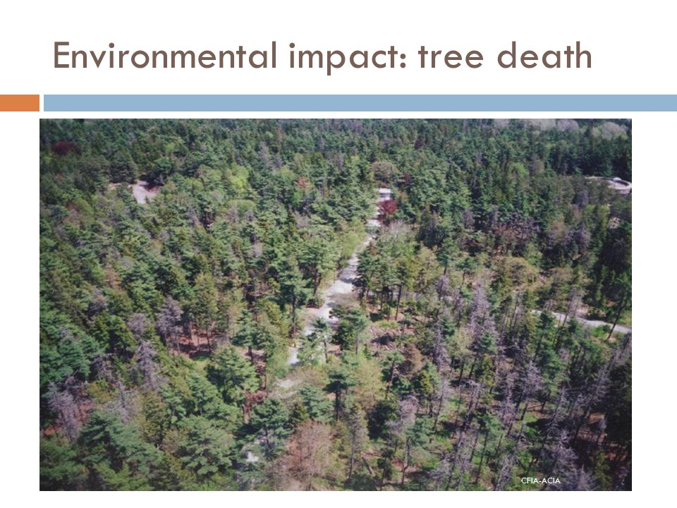 Environmental impact: tree death