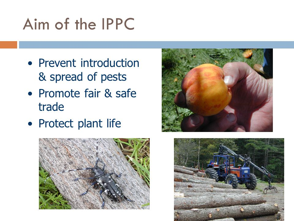 Aim of the IPPC Prevent introduction & spread of pests