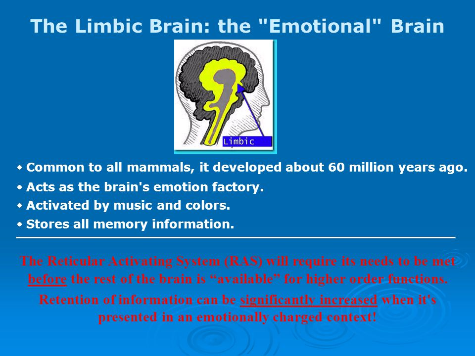 The Limbic Brain: the Emotional Brain