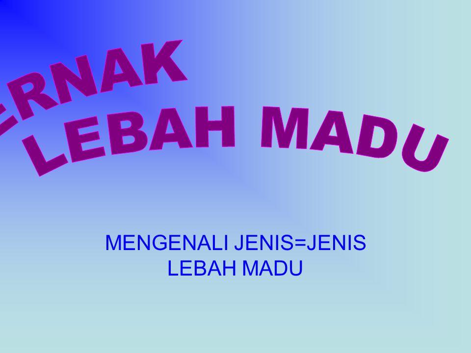 MENGENALI JENIS=JENIS LEBAH MADU