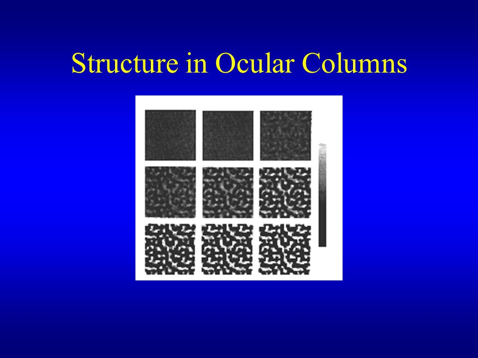 Structure in Ocular Columns