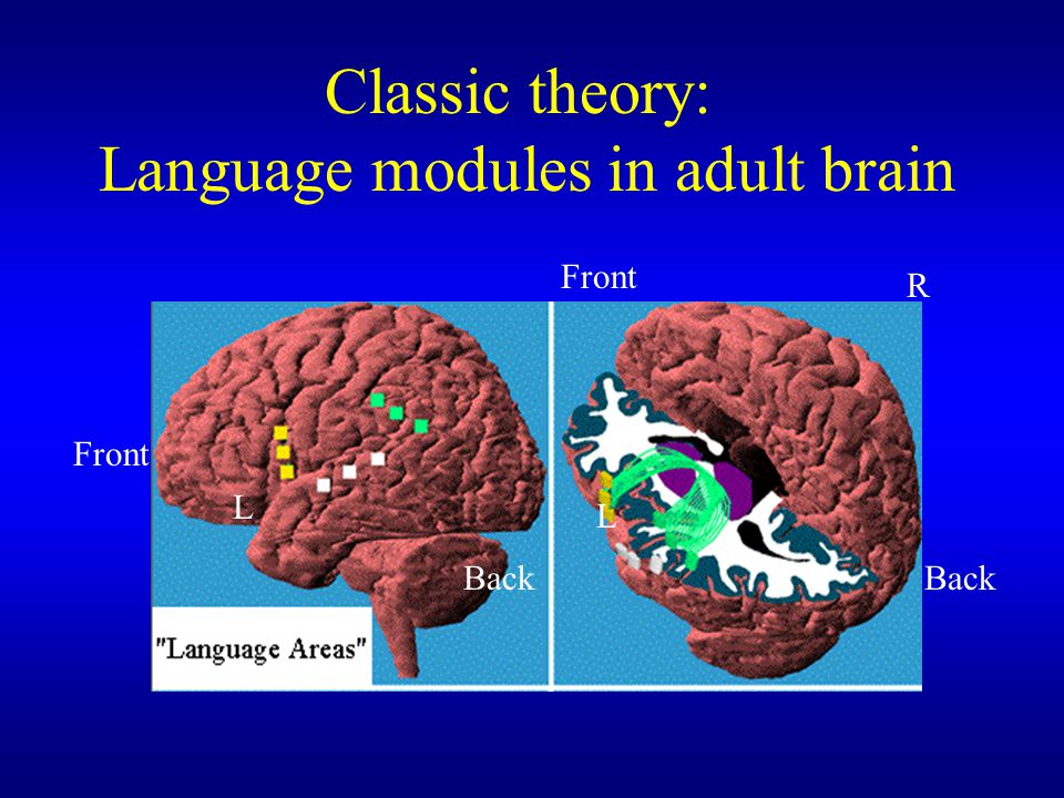 Language modules in adult brain