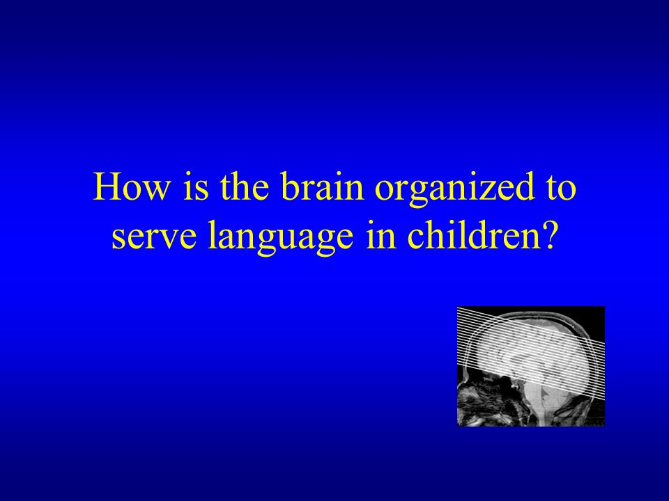 How is the brain organized to serve language in children
