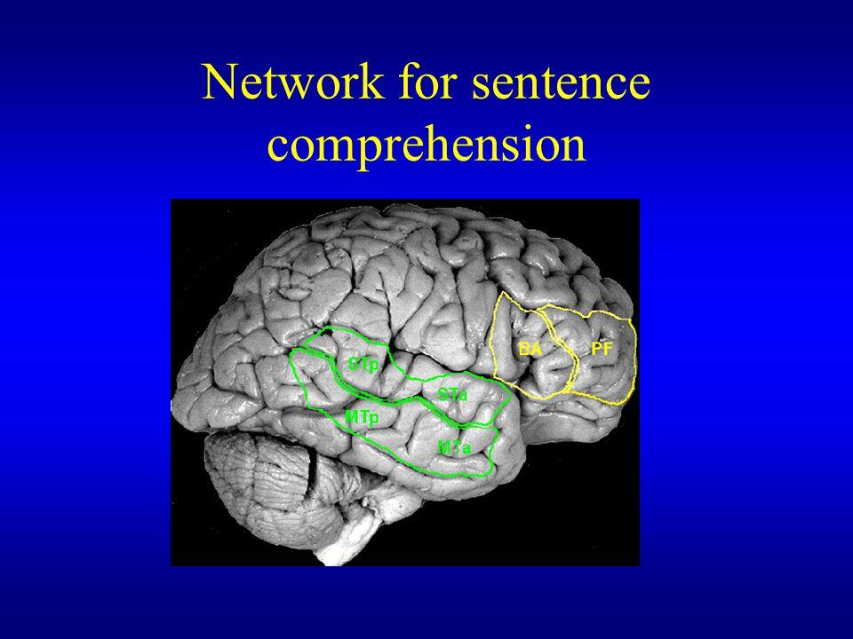 Network for sentence comprehension