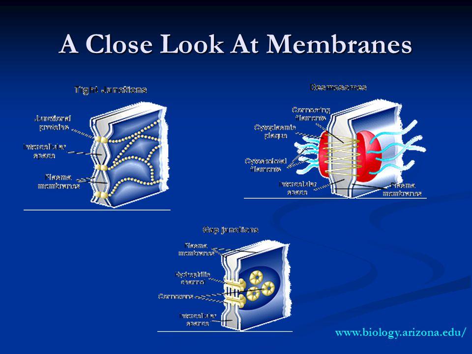 A Close Look At Membranes