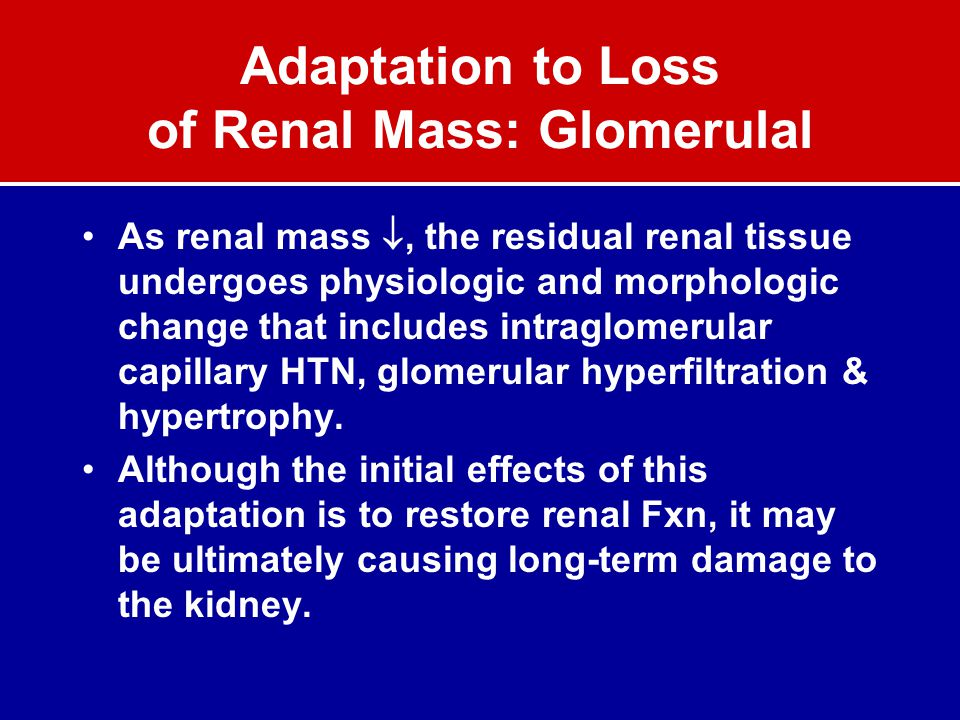 Adaptation to Loss of Renal Mass: Glomerulal