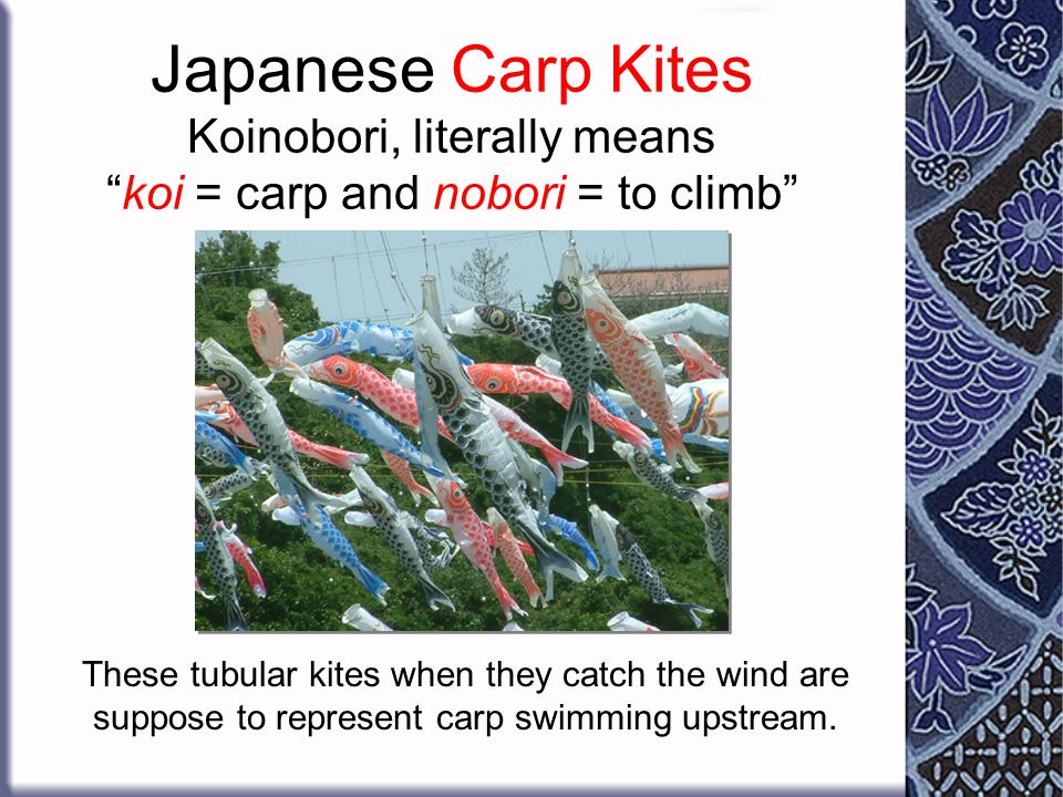 Japanese Carp Kites Koinobori, literally means koi = carp and nobori = to climb
