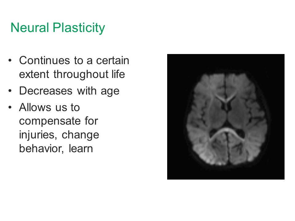 Neural Plasticity Continues to a certain extent throughout life