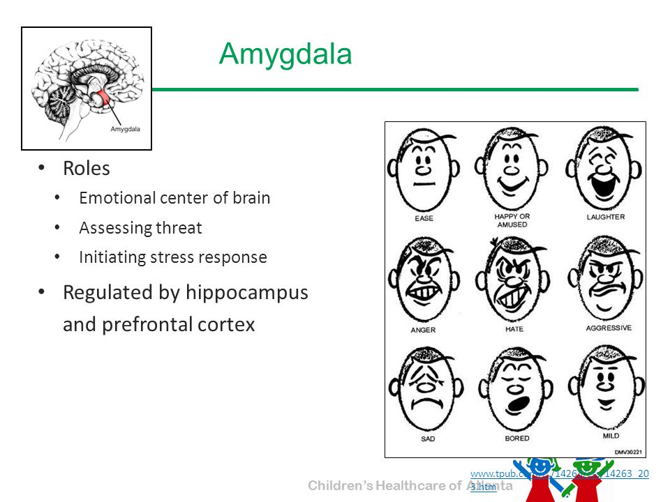 Amygdala Roles Regulated by hippocampus and prefrontal cortex