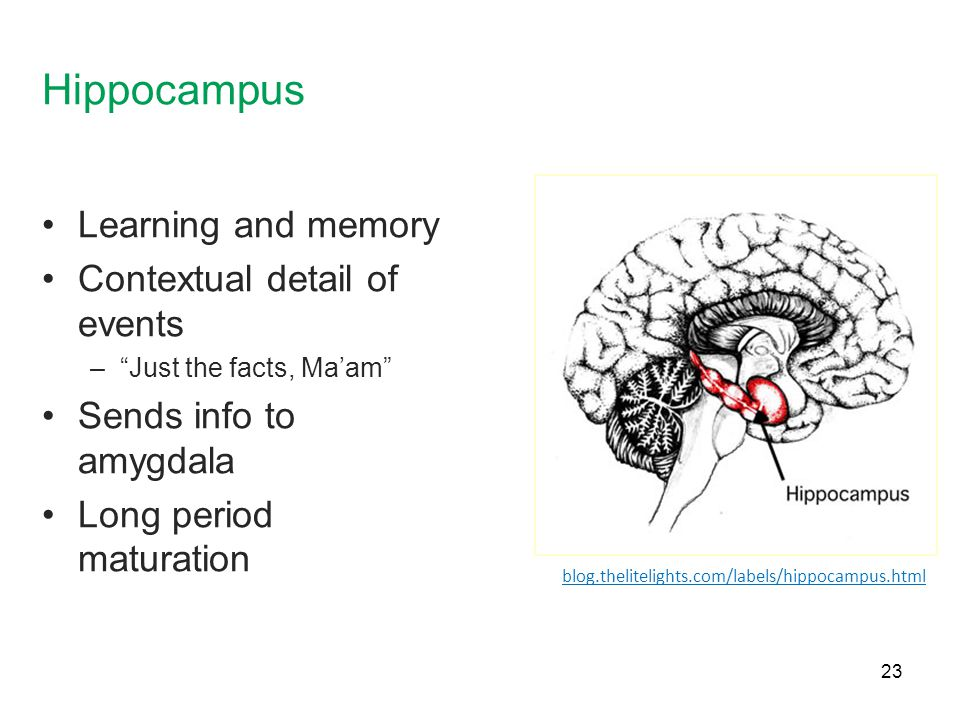 Hippocampus Learning and memory Contextual detail of events