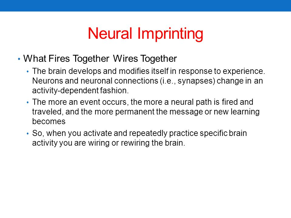 Neural Imprinting What Fires Together Wires Together