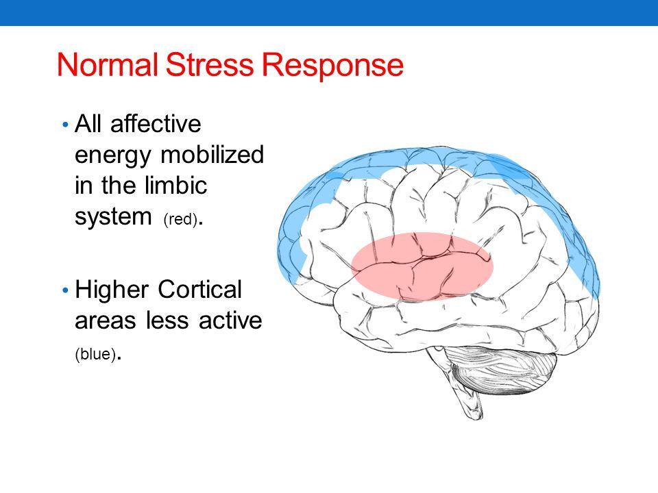 Normal Stress Response