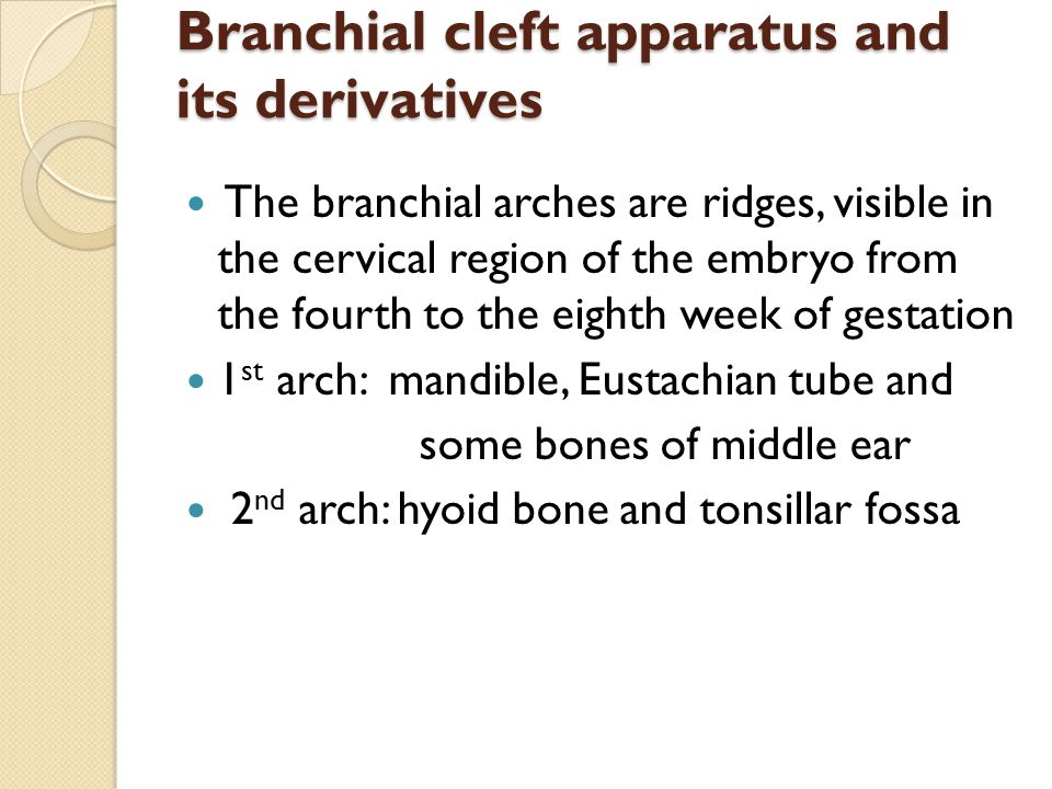 Branchial cleft apparatus and its derivatives