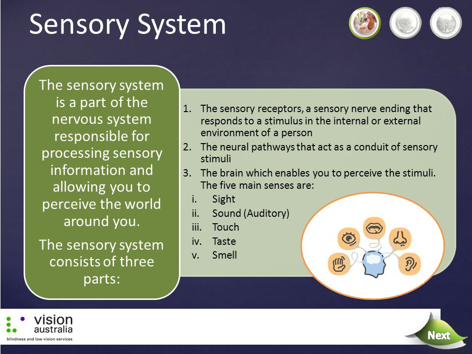 The sensory system consists of three parts: