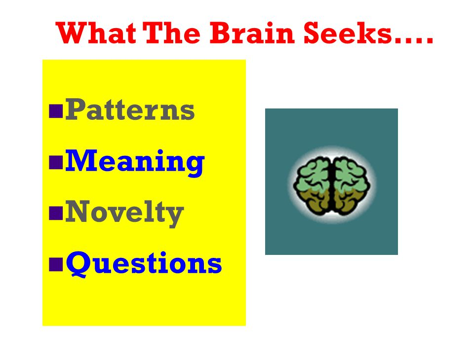 What The Brain Seeks…. Patterns Meaning Novelty Questions