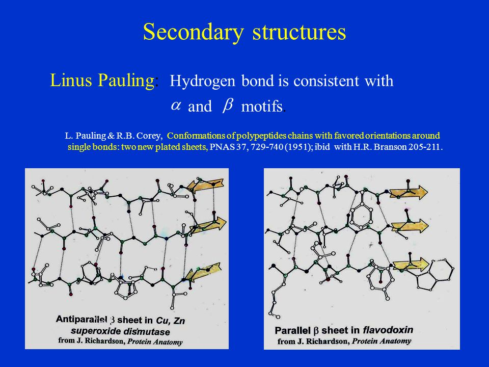 Secondary structures Linus Pauling: motifs. and with consistent is