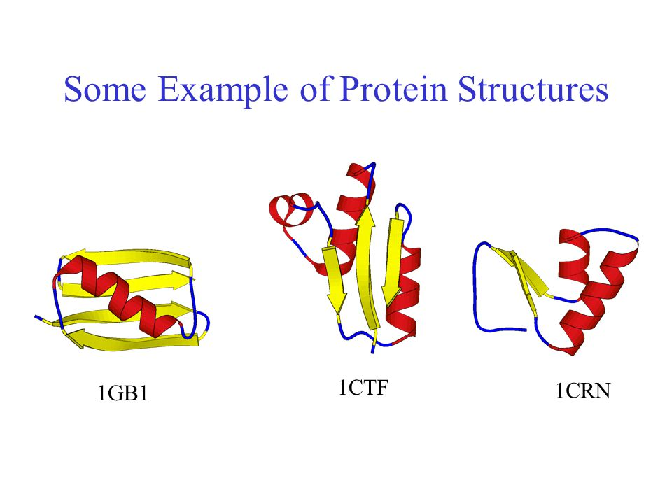Some Example of Protein Structures
