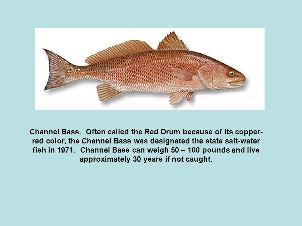 Channel Bass.
