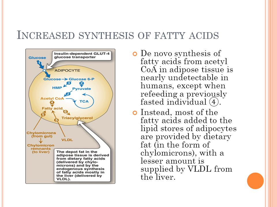 Increased synthesis of fatty acids