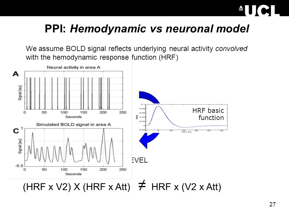 PPI: Hemodynamic vs neuronal model