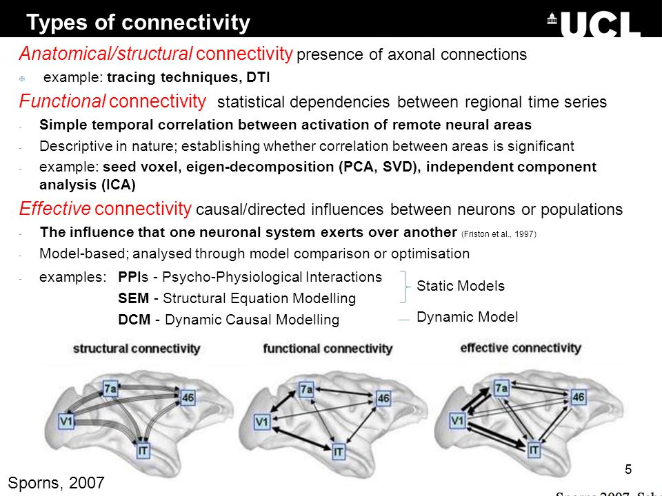 Types of connectivity Anatomical/structural connectivity presence of axonal connections. example: tracing techniques, DTI.