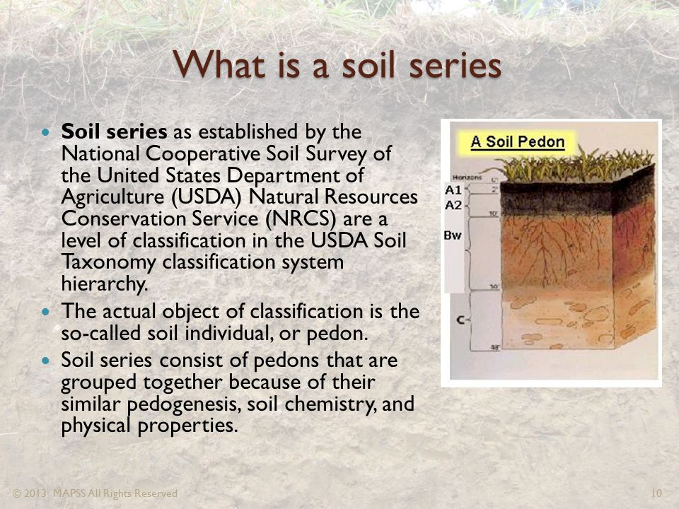 What is a soil series