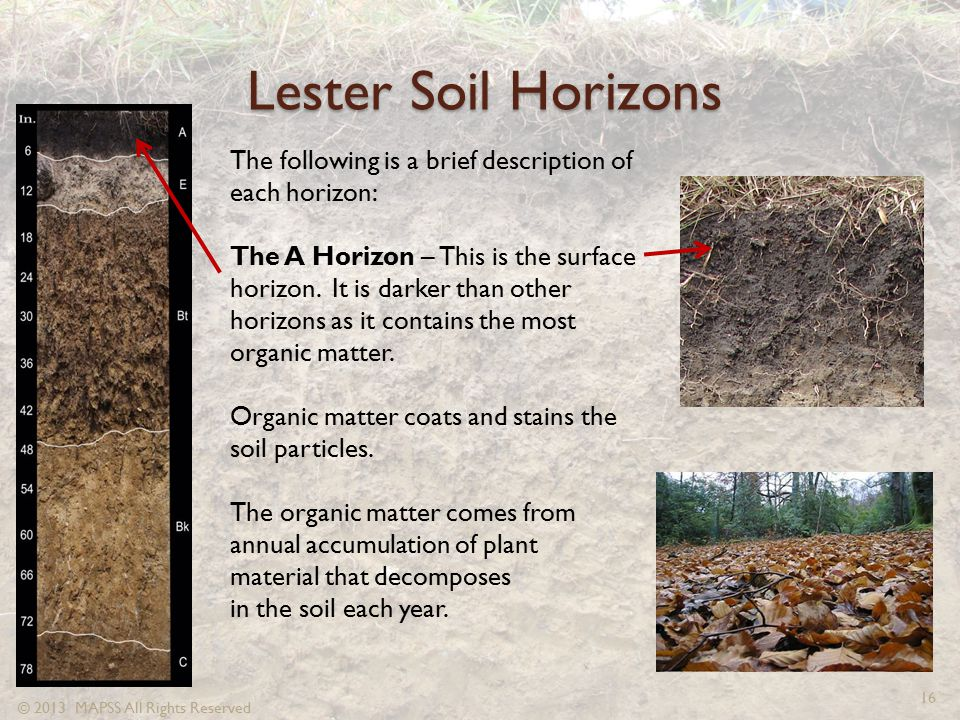 Lester Soil Horizons The following is a brief description of each horizon:
