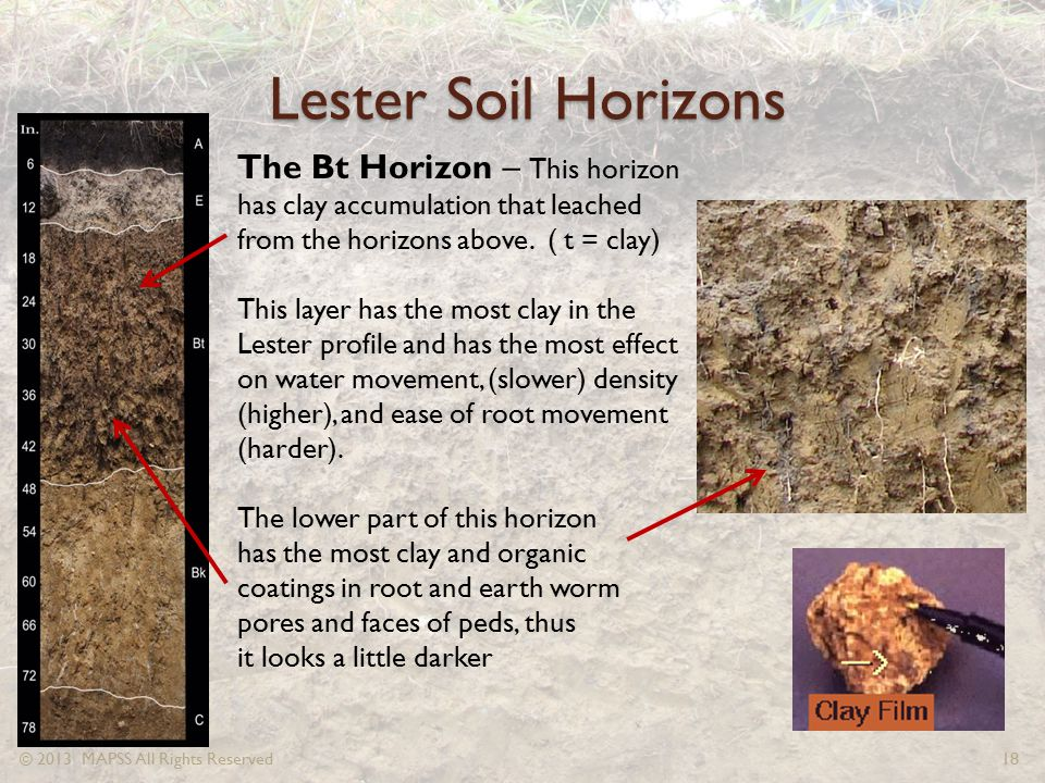 Lester Soil Horizons The Bt Horizon – This horizon has clay accumulation that leached from the horizons above. ( t = clay)