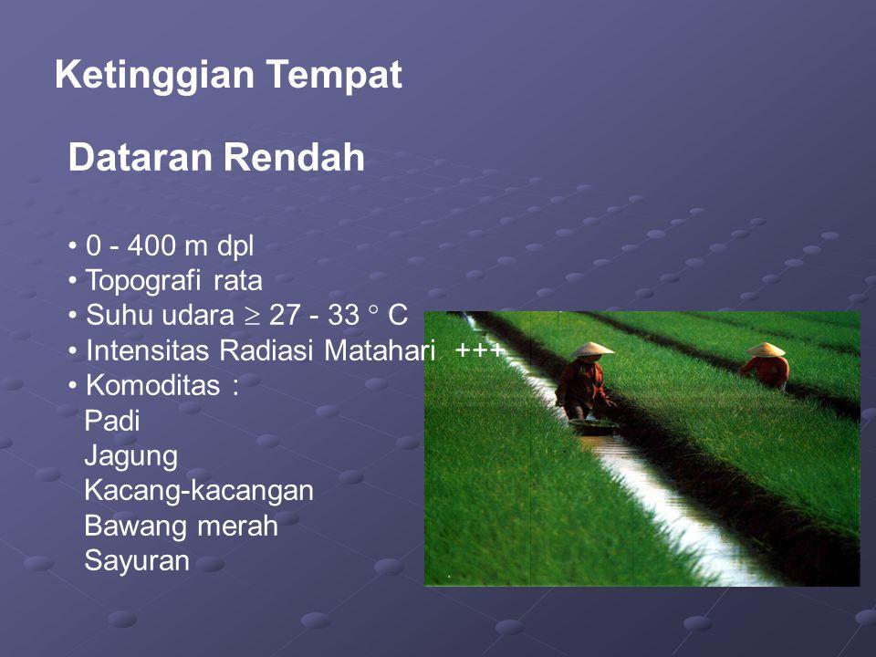 Ketinggian Tempat Dataran Rendah 0 - 400 m dpl Topografi rata