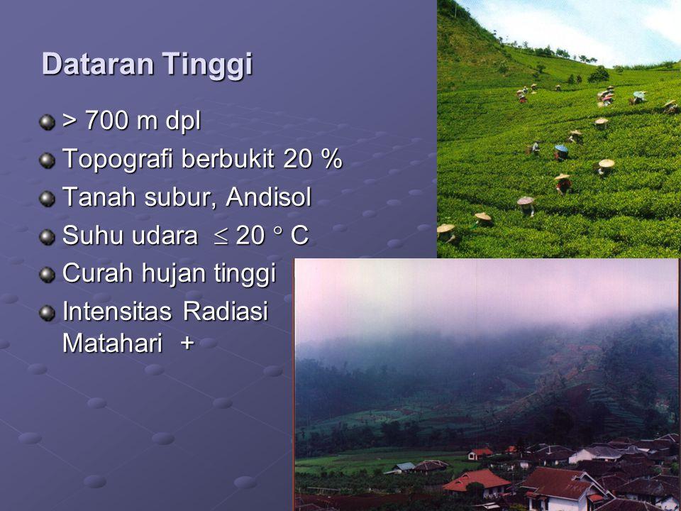 Dataran Tinggi > 700 m dpl Topografi berbukit 20 %
