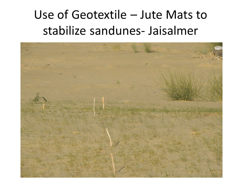 Use of Geotextile – Jute Mats to stabilize sandunes- Jaisalmer