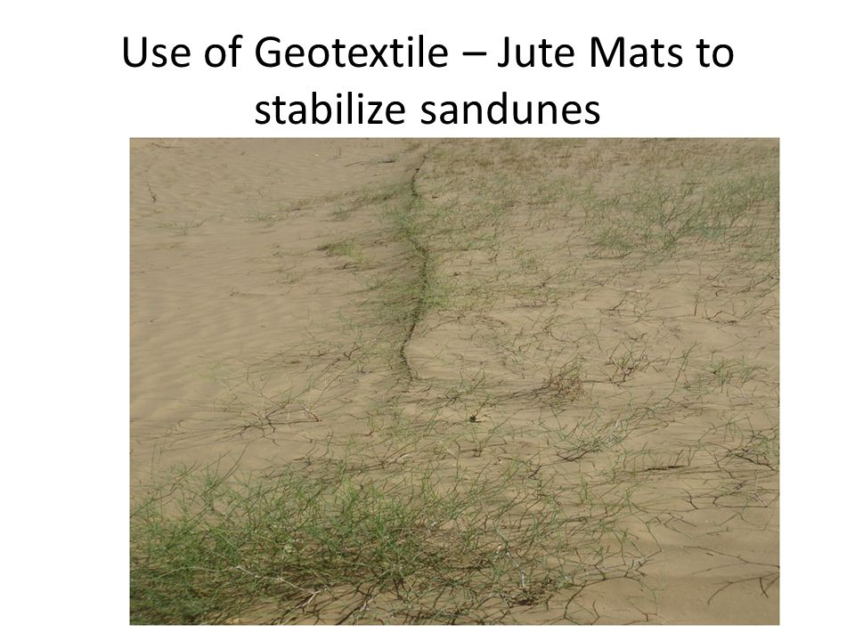 Use of Geotextile – Jute Mats to stabilize sandunes