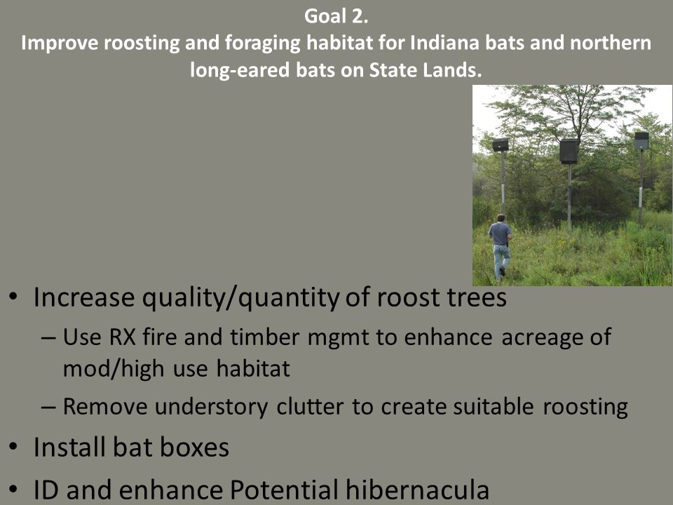 Increase quality/quantity of roost trees