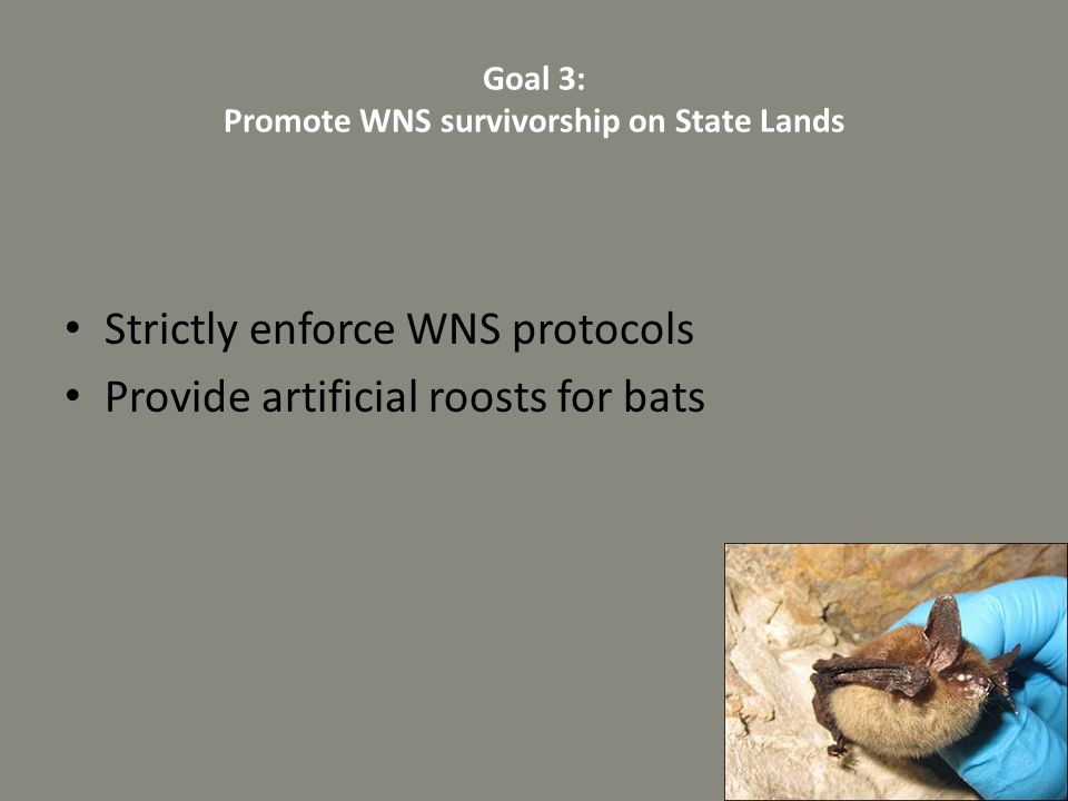 Goal 3: Promote WNS survivorship on State Lands
