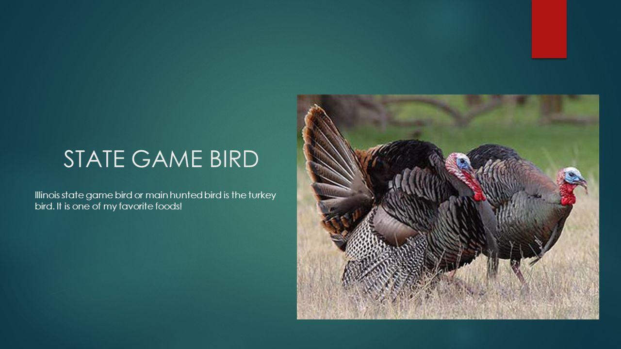 STATE GAME BIRD Illinois state game bird or main hunted bird is the turkey bird.