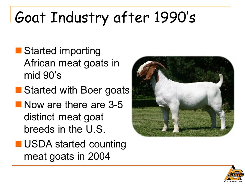 Goat Industry after 1990's Started importing African meat goats in mid 90's. Started with Boer goats.
