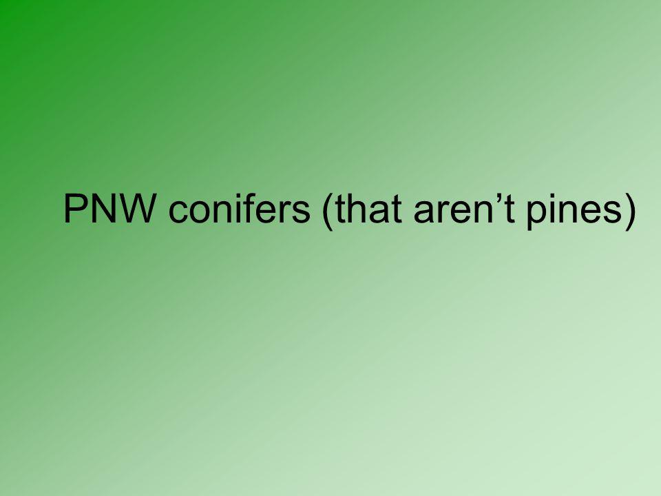 PNW conifers (that aren't pines)