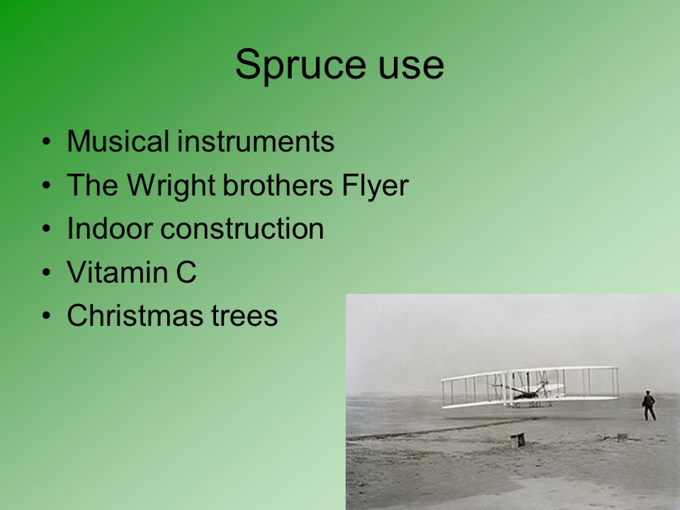 Spruce use Musical instruments The Wright brothers Flyer