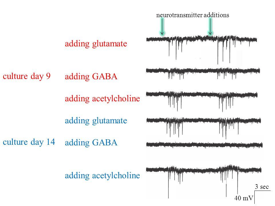 adding glutamate adding GABA adding acetylcholine culture day 9