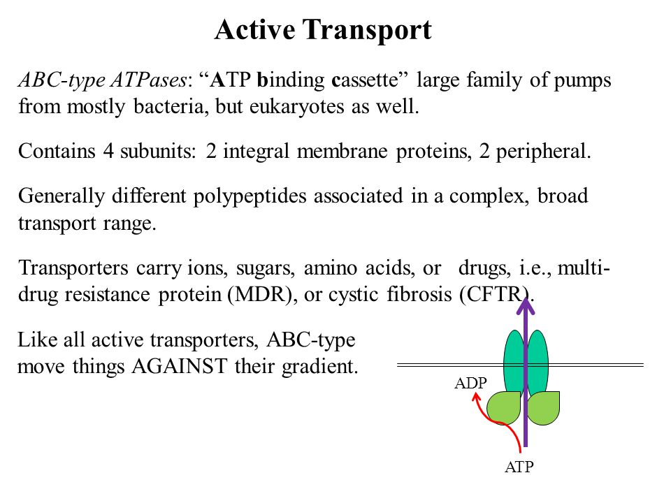 Active Transport ABC-type ATPases: ATP binding cassette large family of pumps from mostly bacteria, but eukaryotes as well.