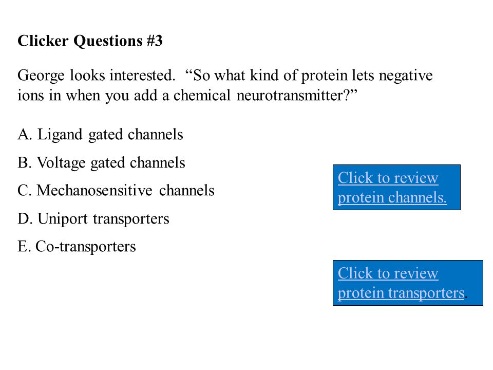 Clicker Questions #3 George looks interested. So what kind of protein lets negative ions in when you add a chemical neurotransmitter