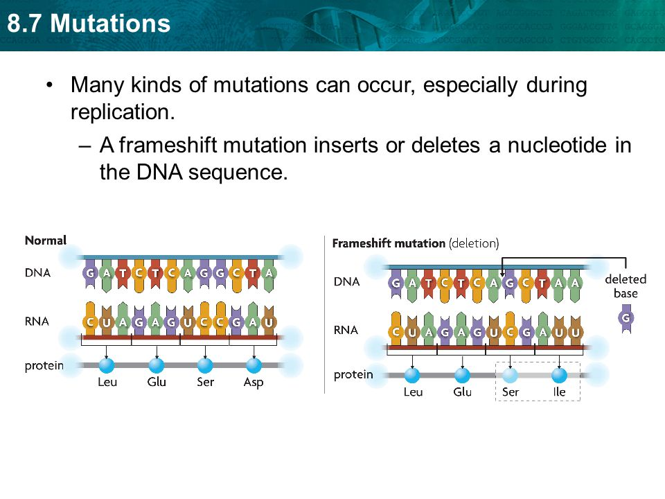 Many kinds of mutations can occur, especially during replication.