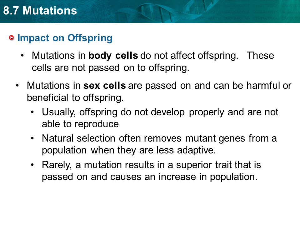Impact on Offspring Mutations in body cells do not affect offspring. These cells are not passed on to offspring.