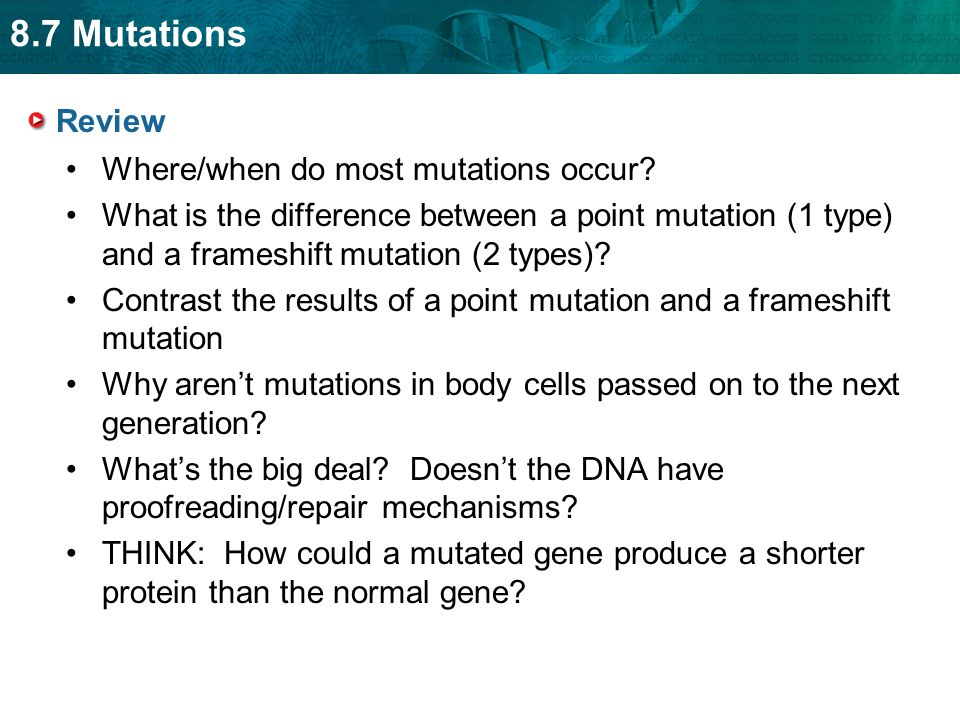 Review Where/when do most mutations occur What is the difference between a point mutation (1 type) and a frameshift mutation (2 types)