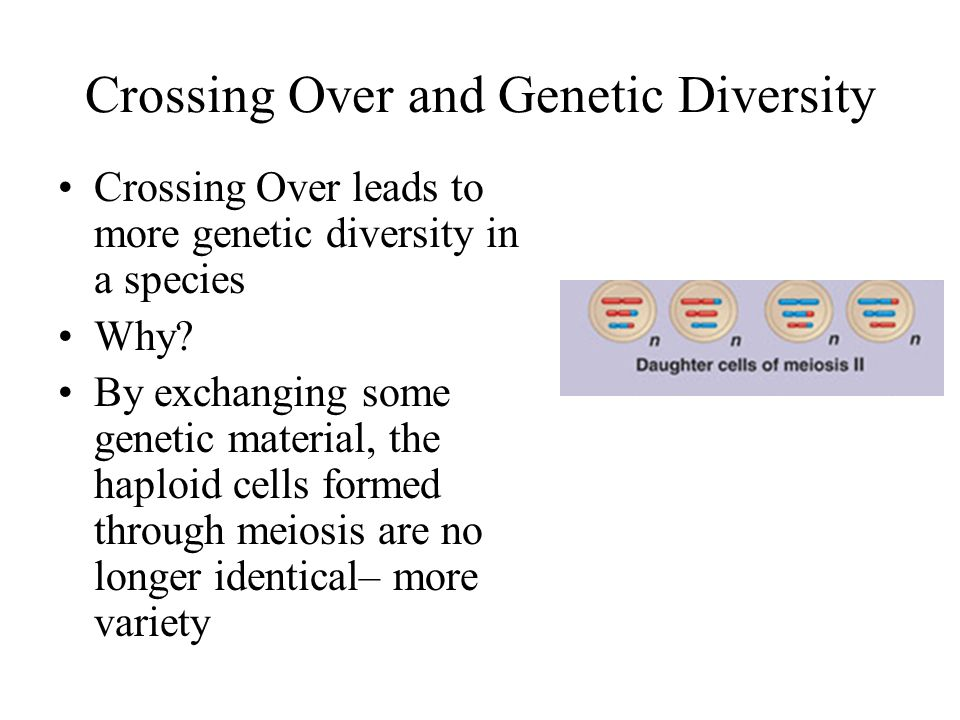 Crossing Over and Genetic Diversity