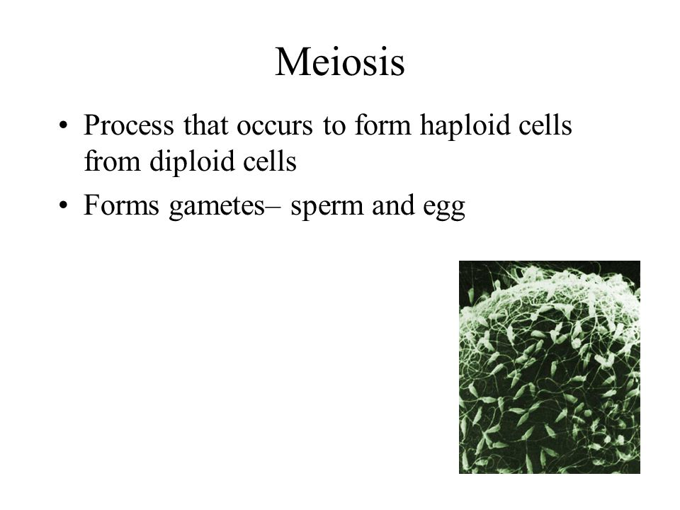 Meiosis Process that occurs to form haploid cells from diploid cells