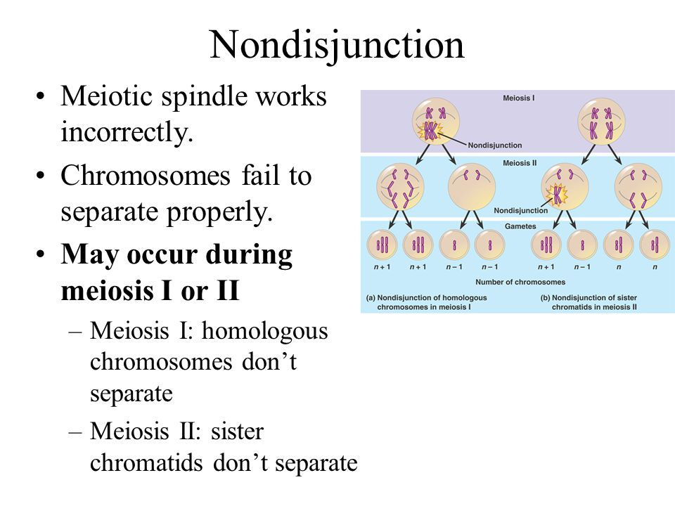 Nondisjunction Meiotic spindle works incorrectly.